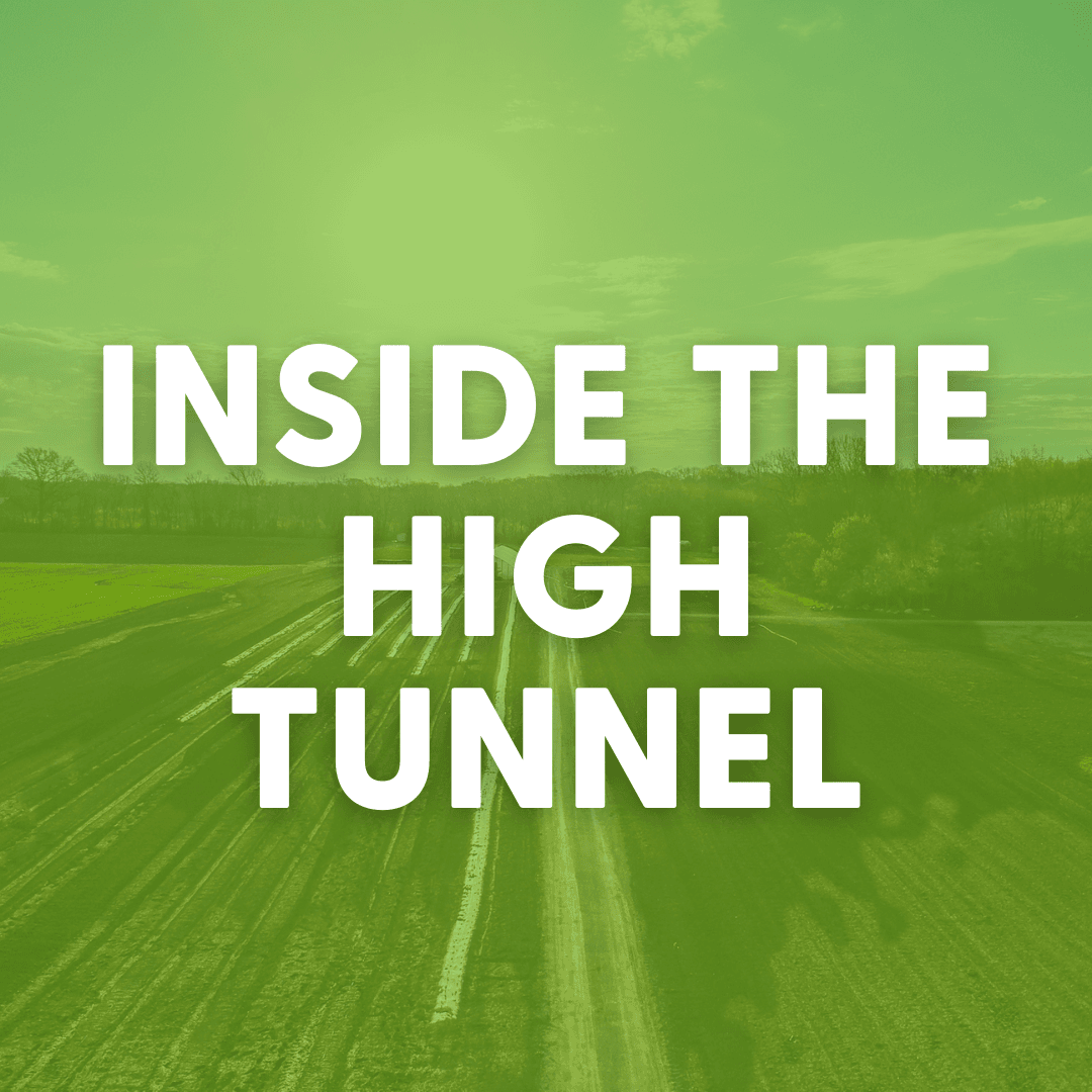 inside the high tunnel
