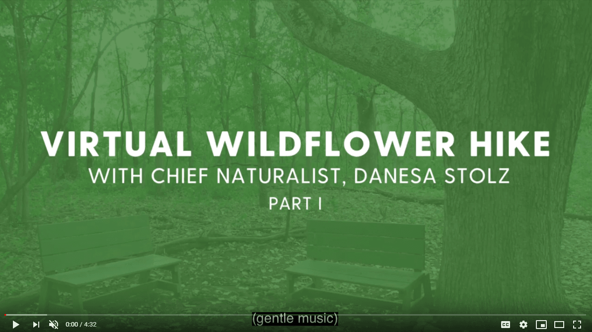 virtual wildflower hike with chief naturalist Danesa Stolz, part 1