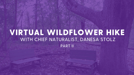 virtual wildflower hike with chief naturalist Danesa Stolz part 2